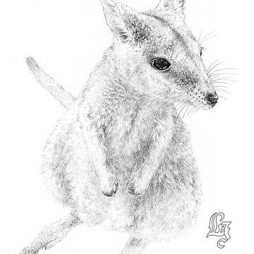 Rock wallaby (ink draft) by LauraGrogan