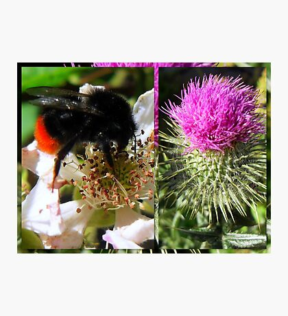 Sweet Nectar featured in The World As We See It or as we missed it. Photographic Print