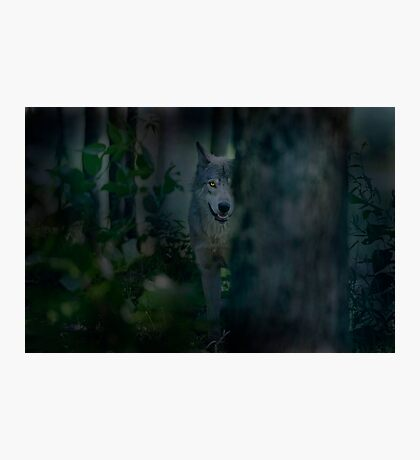 Night Visitor Photographic Print
