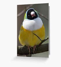 what you looking at ..... Greeting Card
