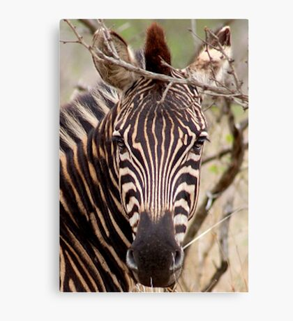 IN EYE CONTACT.... WITH THE ZEBRA Canvas Print