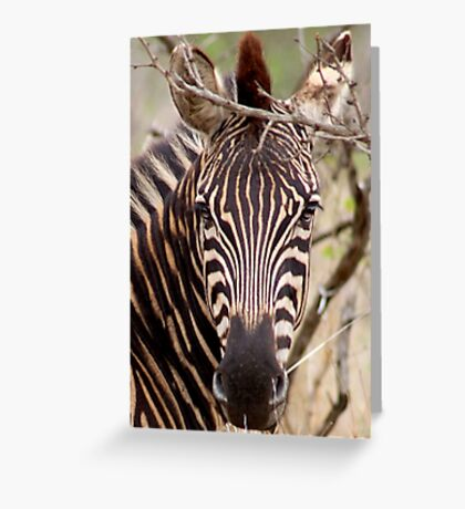 IN EYE CONTACT.... WITH THE ZEBRA Greeting Card