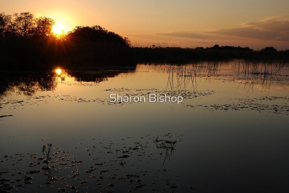 Okavango Delta Sunset - Botswana by Sharon Bishop