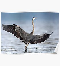 Blue On Blue Wingspan / Great Blue Heron Poster