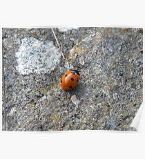 7 Spot Ladybird Poster
