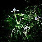 Wild Irises by Phillip M. Burrow