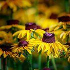 «Floración de verano» de BerryvineImage