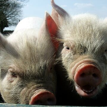 Piggies by SarahTrangmar