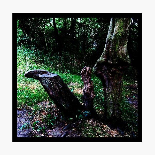 Mummy Tree Baby Tree Photographic Print