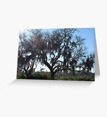 Tree from the Bayou Greeting Card