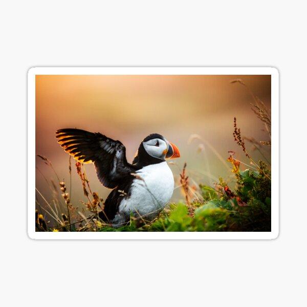 Papageientaucher in Island winken Sticker