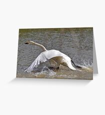Bewick one cleared for take off Greeting Card