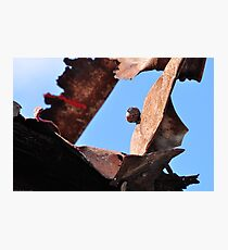 Protective sculpture Photographic Print