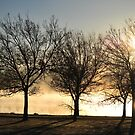 Tuggeranong trees by Bryan Cossart