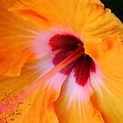 Yellow Hibiscus by Mistyarts