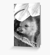 Feather Brella - Richmond UK Greeting Card