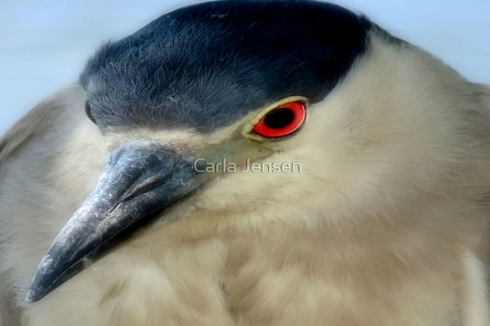 My Close-Up by Carla Jensen