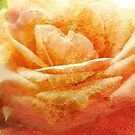Painting Cream Rose. by Vitta