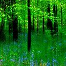 Bluebell Fantasy by Brian Tarr