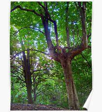 Tree and Foliage - Blackbutt Nature Reserve Poster