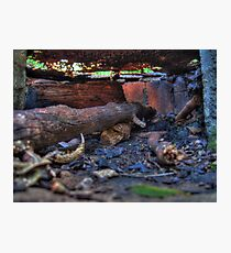 BBQ Inside - Blackbutt Nature Reserve Photographic Print