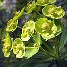 Green Bells by AlbertStewart