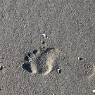 Lonely Footprint by Elspeth  McClanahan