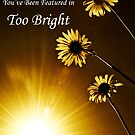 Too Bright Banner by Gerry Chaney