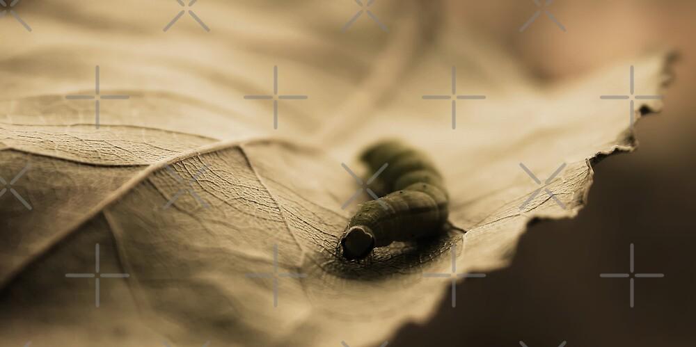 life on a leaf by Ingrid Beddoes