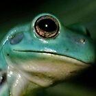 Vietnamese Tree Frog by AnnDixon