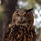 Eagle Owl by Dave & Trena Puckett