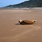 Seal pup on beach, Cromer by ShroomIllusions