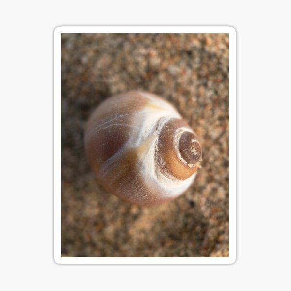 Little shell, on the beach.  Macro shot. Sticker