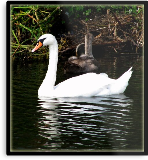 The Swan and the Ducklings by Brian Damage