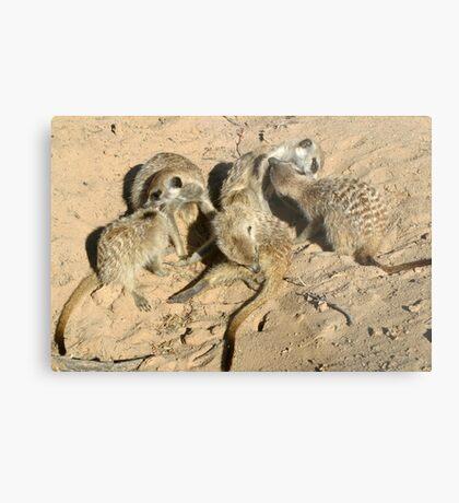 An arrangement of meerkats Metal Print