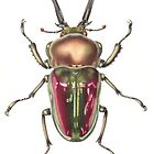 Rainbow Stag Beetle by Cheryl Hodges