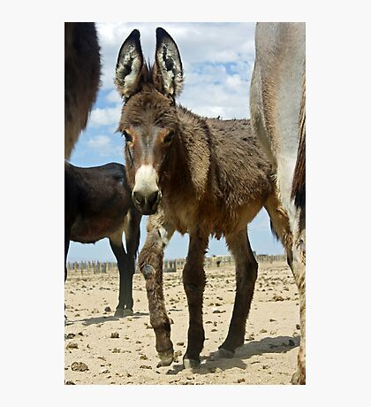 Baby Burro Looking At Me Photographic Print