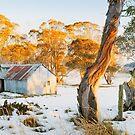Howitt Hut, Alpine National Park, Victoria, Australia by Michael Boniwell