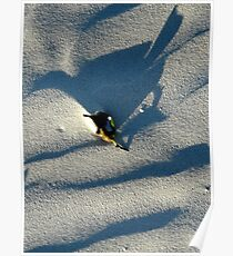Bird in the sand Poster