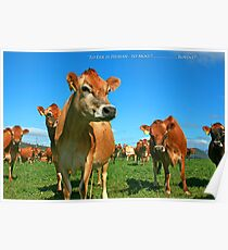 To Err is Human to Moo.........Bovine! Poster