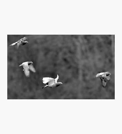 Pigeon Formation Team Photographic Print