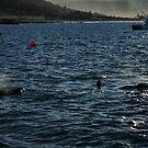 three fins bicheno tasmania by tim buckley   bodhiimages