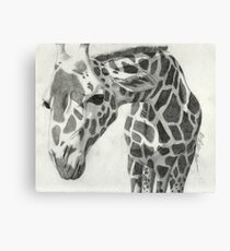 A giraffe in pencil Canvas Print