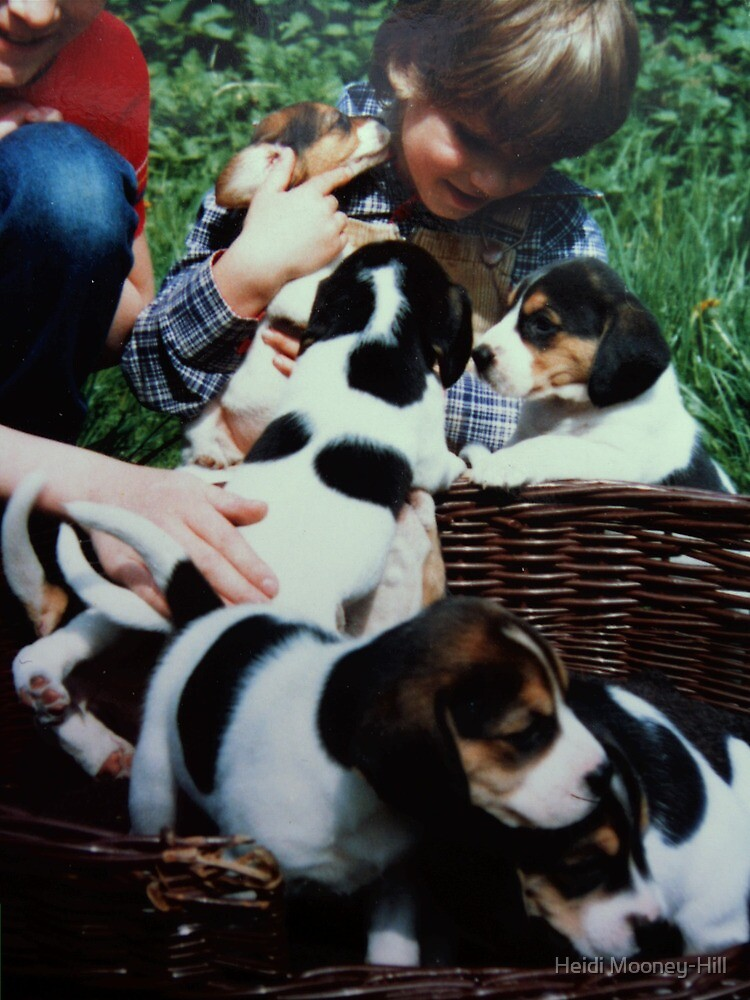 We all love Puppys by Heidi Mooney-Hill