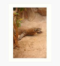 komodo dragon Art Print