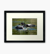 Two Loons Framed Print