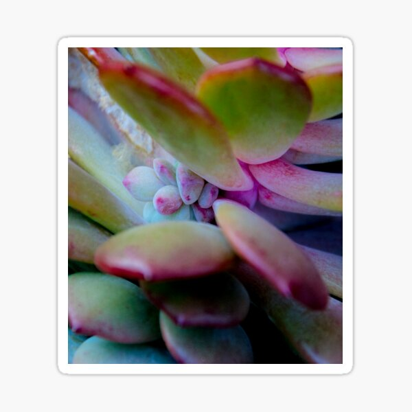 succulent detail Sticker