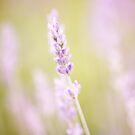 Lavender summer by Eliza1Anna
