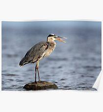 Gag Reflex / Great Blue Heron Juvenile Poster