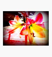 Lily Rays Photographic Print